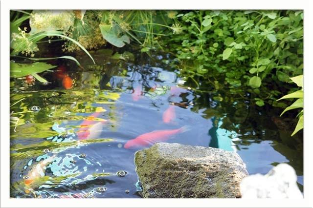 Fish swim in the gazebo pond, turtles also - not shown