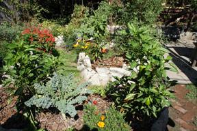 Julia's eco friendly home Garden