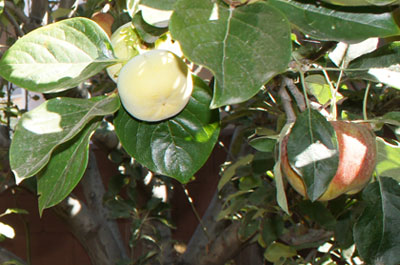 julia-eco-home-network-fruit