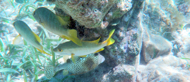 Touch only Your Camera While Snorkelling or Diving