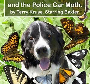 Baxter and the Butterflies